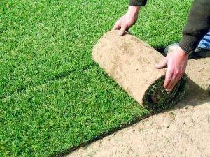 ¿Qué es el tepe? | Tepe en Lugo