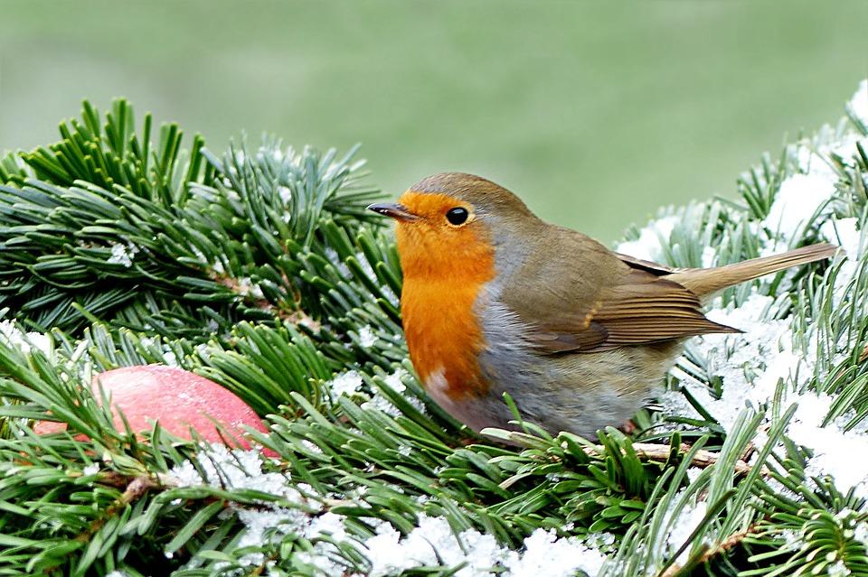Tareas de diciembre en el jardín