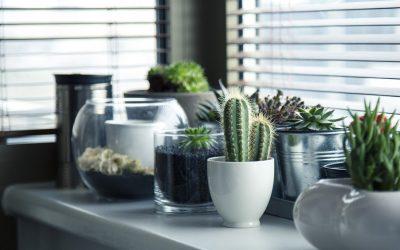 Las plantas de interior y el frío en invierno