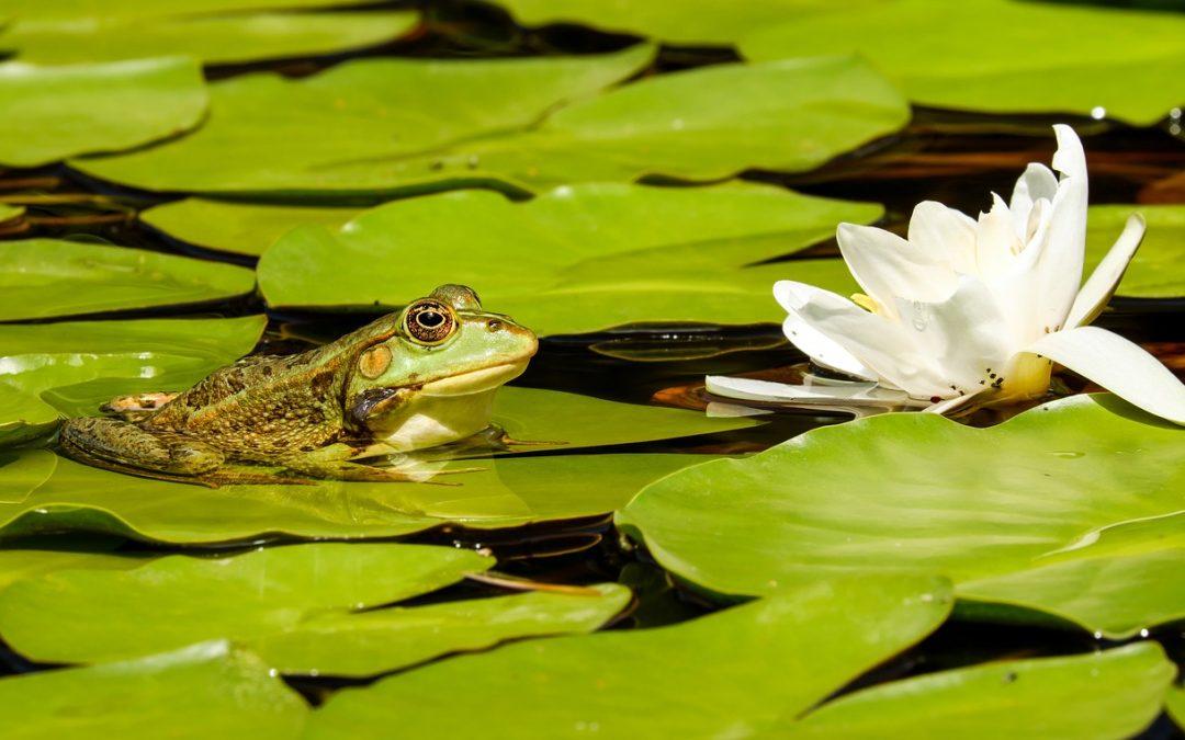 El movimiento del agua en el estanque