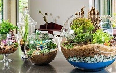Un jardín en miniatura