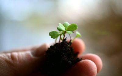 Como transplantar plantas en contenedor