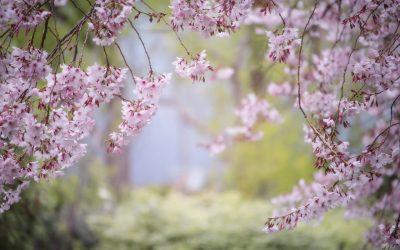Tareas de Abril en el Jardín 2019