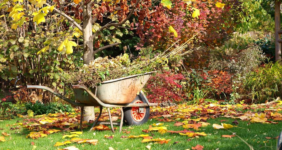 Las tareas de septiembre en nuestro jardín
