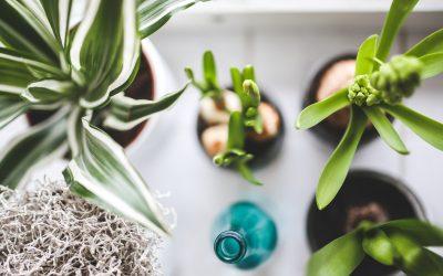 Cuidados plantas de interior