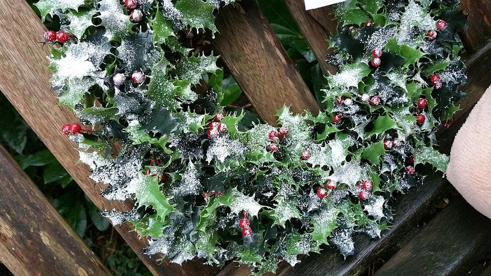 Tareas de Invierno en el Jardín