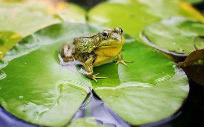 Cómo tratar el agua de estanque