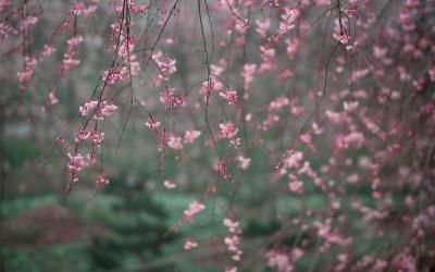 Cuidados del jardín en febrero (Hemisferio Norte)