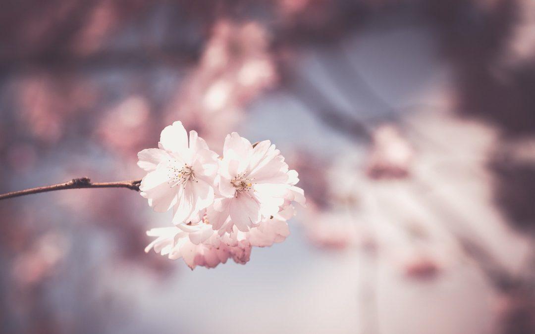 Que hacer en Marzo en el jardín [hemisferio norte]