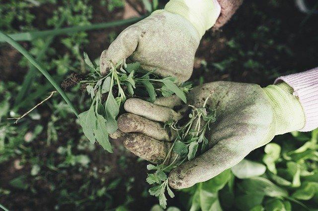 Ropa para trabajar en Jardinería