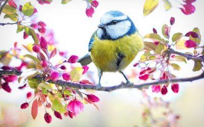 Abril, primavera en el Jardín, Tareas