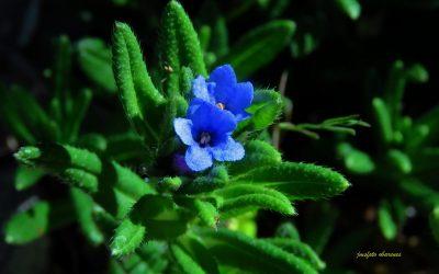 La Carrasquilla azul