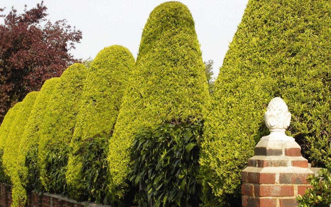 Cómo mantener y cuidar los setos en el jardín