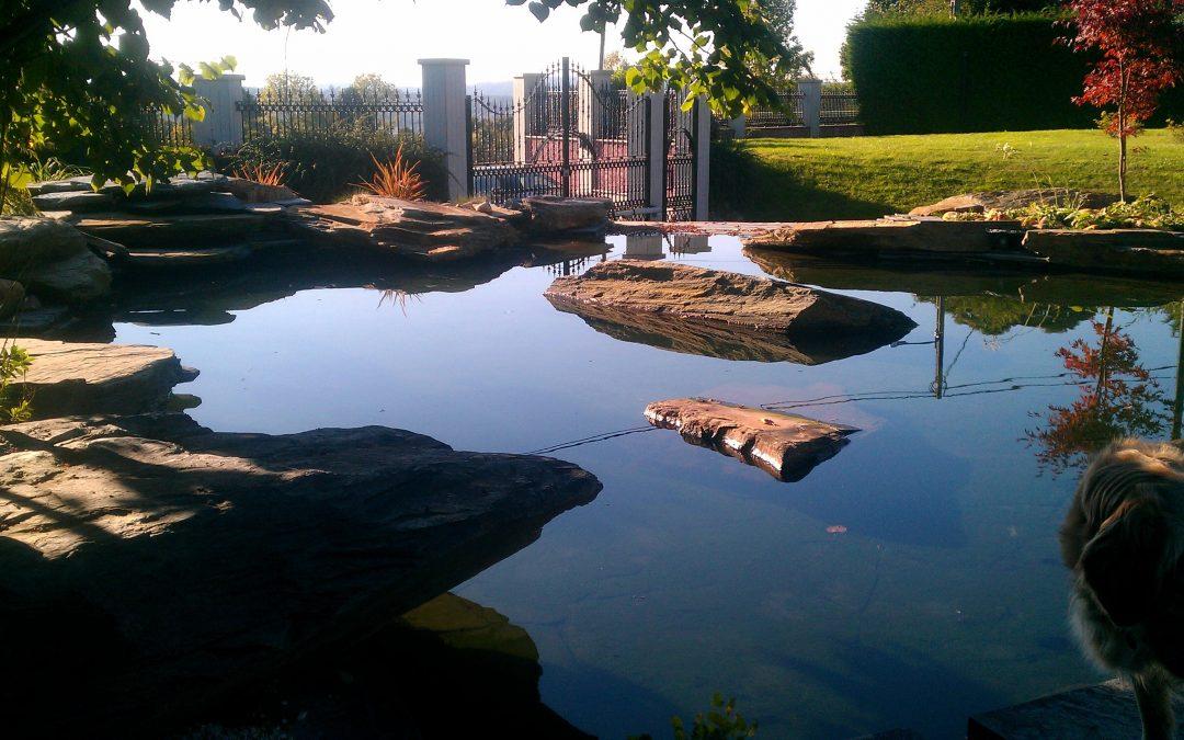 Mantenimiento del estanque