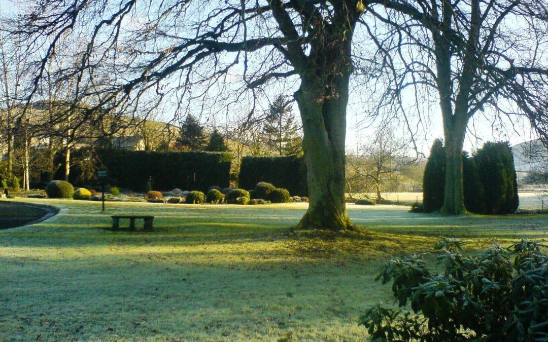 Tareas de enero en el jardín en el hemisferio norte