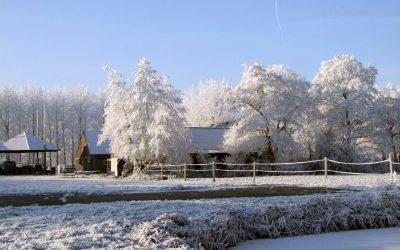 Tareas de diciembre en el jardín en el hemisferio norte