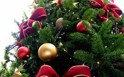 Árboles naturales para navidad