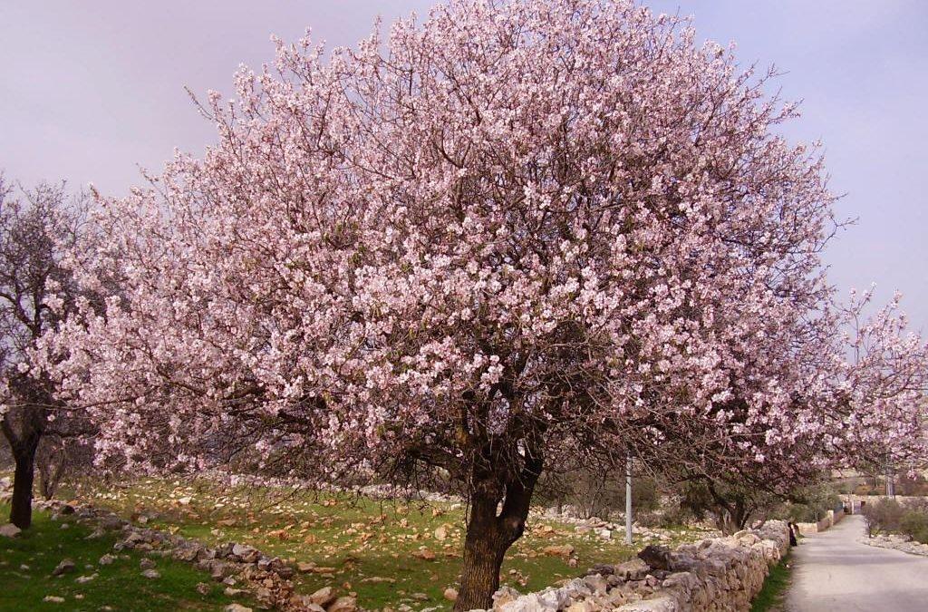 Febrero en el jardín