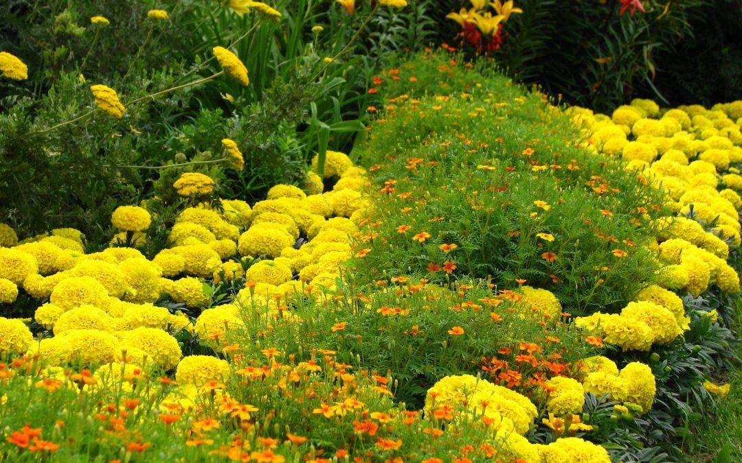Prevención de plagas y enfermedades en el jardín