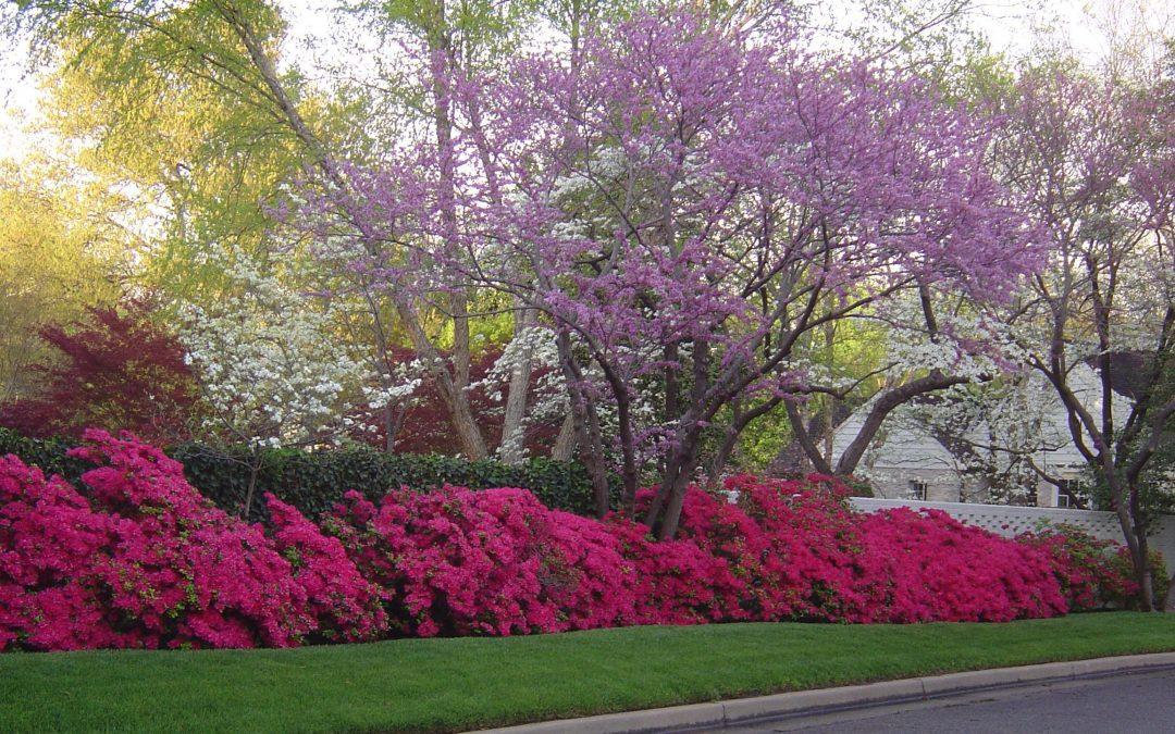 Tareas de Abril en el jardín el hemisferio norte 2021