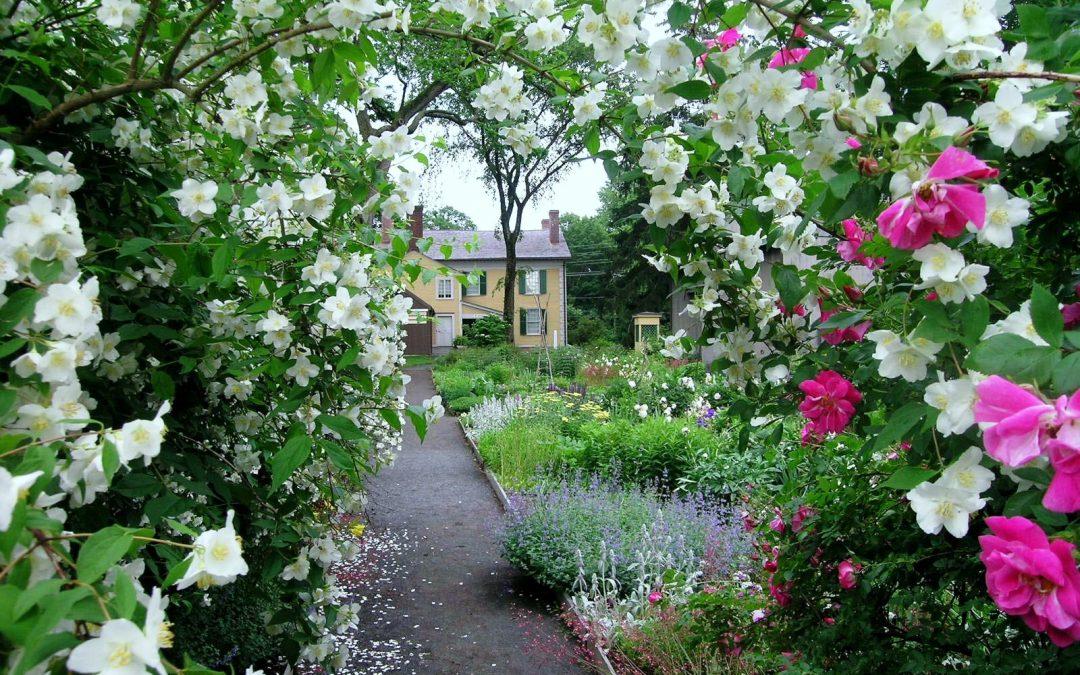 Que hacer en Junio en el jardín
