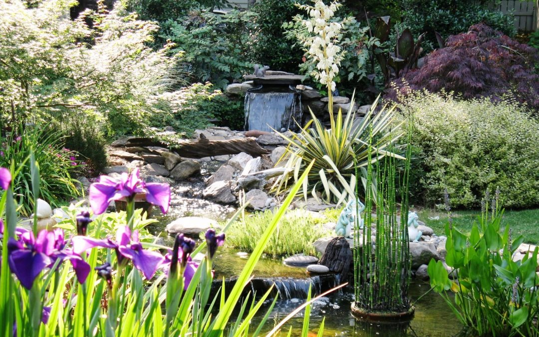 Tareas de Julio en jardinería en el hemisferio norte