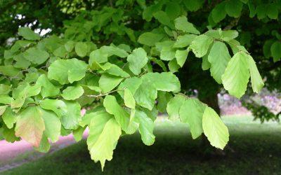 El árbol de hierro
